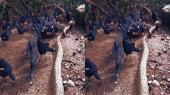 Парк птиц 3Д | Bird Park 3D Горизонтальная анаморфная