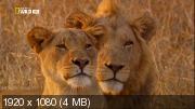 Львица в изгнании (2012) HDTV 1080i